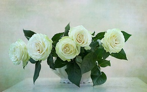 Picture WHITE, FLOWERS, NATURE, FLOWER, ROSES