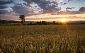 Picture field, nature, sunrise