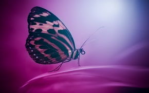 Picture background, butterfly, color, wings, insect, moth