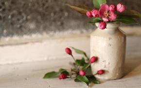 Picture style, vase, flowers, buds