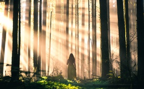 Picture forest, girl, rays, trees, Lizzy Gadd, Sleepwalking