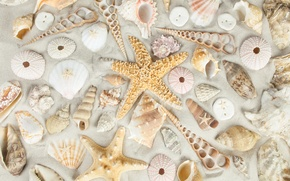 Wallpaper sand, beach, shell, sand, starfish, seashells