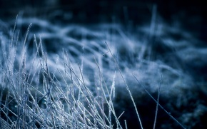 Picture cold, frost, grass, night, dry