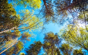 Picture greens, forest, the sky, leaves, trees, landscape, nature, foliage, spring, heights