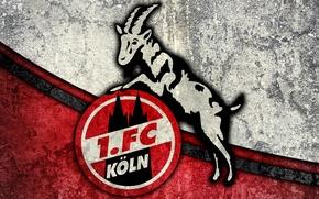 Picture wallpaper, sport, logo, football, 1. FC Koln
