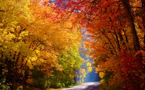 Picture road, autumn, forest, trees, yellow, Sunny, colorful