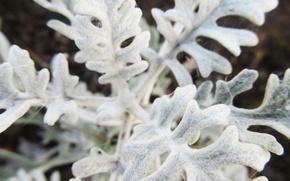Picture macro, white, plant