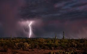 Picture the sky, night, lightning, desert, cacti