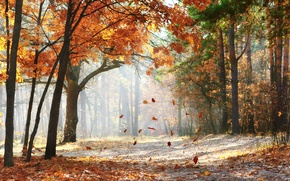 Picture road, forest, landscape, nature, morning, beautiful, forest, road, landscape, nature, beautiful, scenic, morning, Autumn trees, …