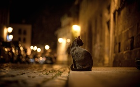 Picture cat, the sidewalk, road, pavers, the city, lights, street, bokeh, night, black, cat