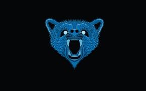 Picture face, blue, minimalism, head, bear, black background, bear