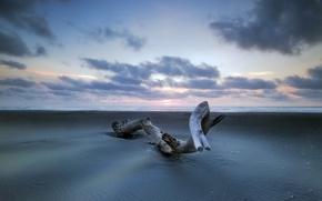Picture sand, sea, landscape, tree