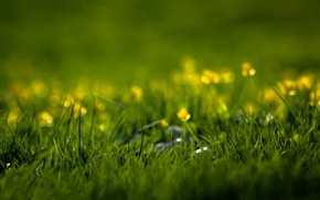 Picture greens, summer, grass, flowers, freshness, nature, spring, weed, a blade of grass, grass