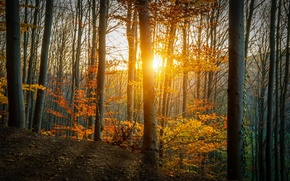 Picture autumn, forest, leaves, trees, yellow, the rays of the sun