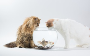 Picture fish, cats, interest, aquarium, Daisy, Ben Torode, Hannah, Benjamin Torode