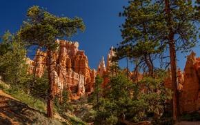 Picture trees, pine, Utah, Bryce Canyon, Utah, Bryce Canyon National Park, National Park Bryce Canyon, Bryce …