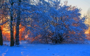 Picture winter, snow, trees, sunset, branches, nature, photo, dawn