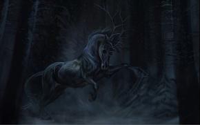 Picture darkness, horse, black, skull, the demon, horns, art, aivoree