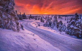 Picture winter, road, Norway, sledding
