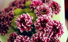 Picture Flowers, bouquet, petals, purple