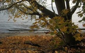 Picture autumn, trees, nature, river, photo, coast, Poland, Puck