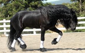 Wallpaper horse, horse, stallion, frieze