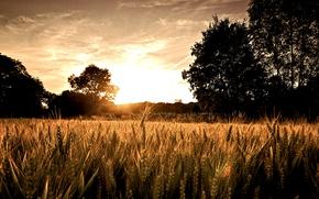 Picture trees, sunrise, Field, the sun