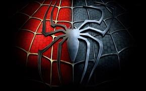 Picture web, spider, emblem, Spider-Man