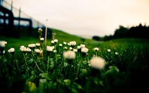Wallpaper grass, white, lawn