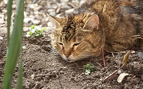 Picture cat, flowers, flowerbed, the garden