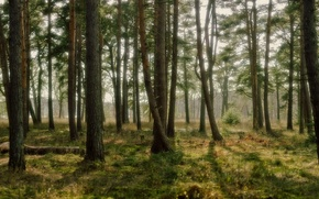 Picture forest, grass, light, trees, nature