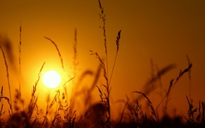 Picture macro, light, silhouette, the sun, grass, sunset, spikelets