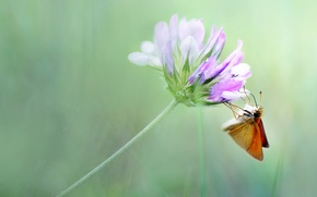 Picture flower, summer, macro, background, butterfly, Wallpaper from lolita777