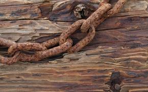 Picture tree, Board, chain, iron