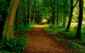 Picture road, forest, trees, Park