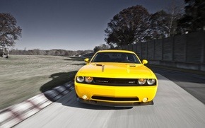 Picture yellow, Yellow, Dodge Challenge, Dodge Challenger