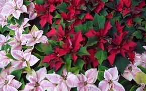 Picture leaves, macro, paint, plant, garden