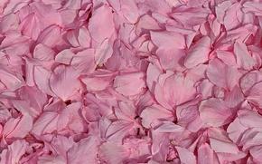 Picture macro, petals, pink
