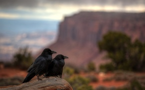 Picture Utah, Canyonlands National Park, Raven Repose