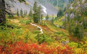 Wallpaper autumn, trees, mountains, river, gorge, Russia, the bushes, Far East, Russian Far East
