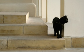 Picture black, cat, on the stairs