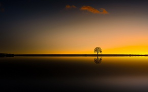 Picture night, tree, silhouette