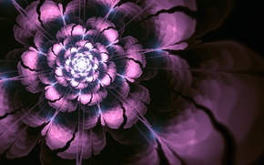 Picture flower, abstraction, art, art