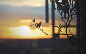 Picture leaves, sunset, plant, branch