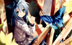 Picture animal ears, catgirl, tail, butterfly