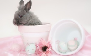 Picture flower, egg, rabbit, Easter, pot, easter