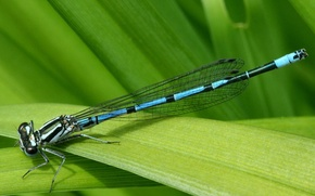 Wallpaper leaf, macro, grass, dragonfly