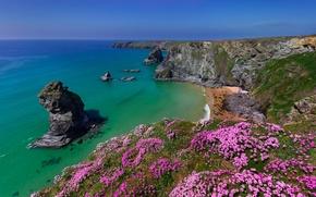 Picture sea, flowers, rocks, coast, England, England, Cornwall, Cornwall, Bedruthan Steps, Celtic sea, Celtic Sea, seaside …