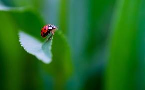 Picture sheet, ladybug, point, bokeh