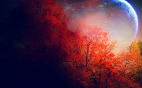 Picture autumn, trees, the moon, stars, red